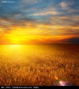 金色的草原