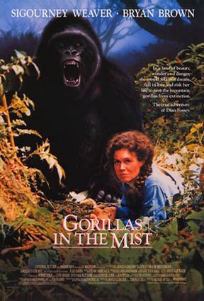 迷霧森林十八年/霧鎖危情/迷霧中的大猩猩