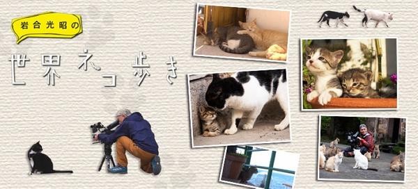 岩合光昭の貓步走世界~凱恩斯篇