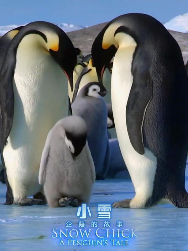 小雪.企鵝的故事