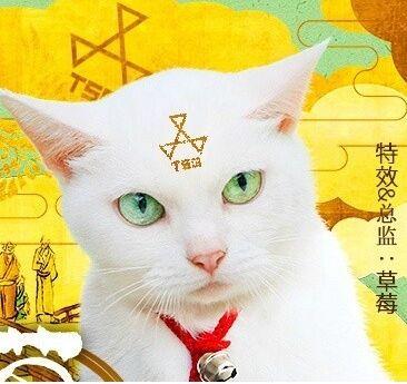 貓侍~玉之丞、進軍江戶
