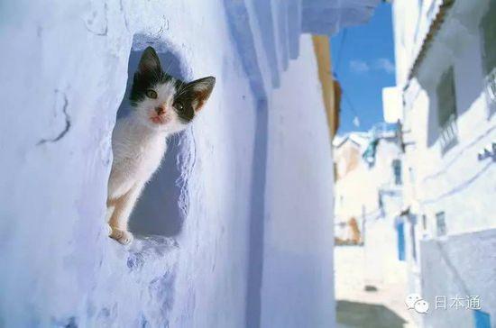 岩合光昭之貓步走世界~阿姆斯特丹篇