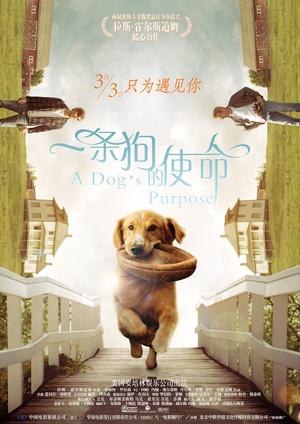 一條狗的使命(喜劇片)